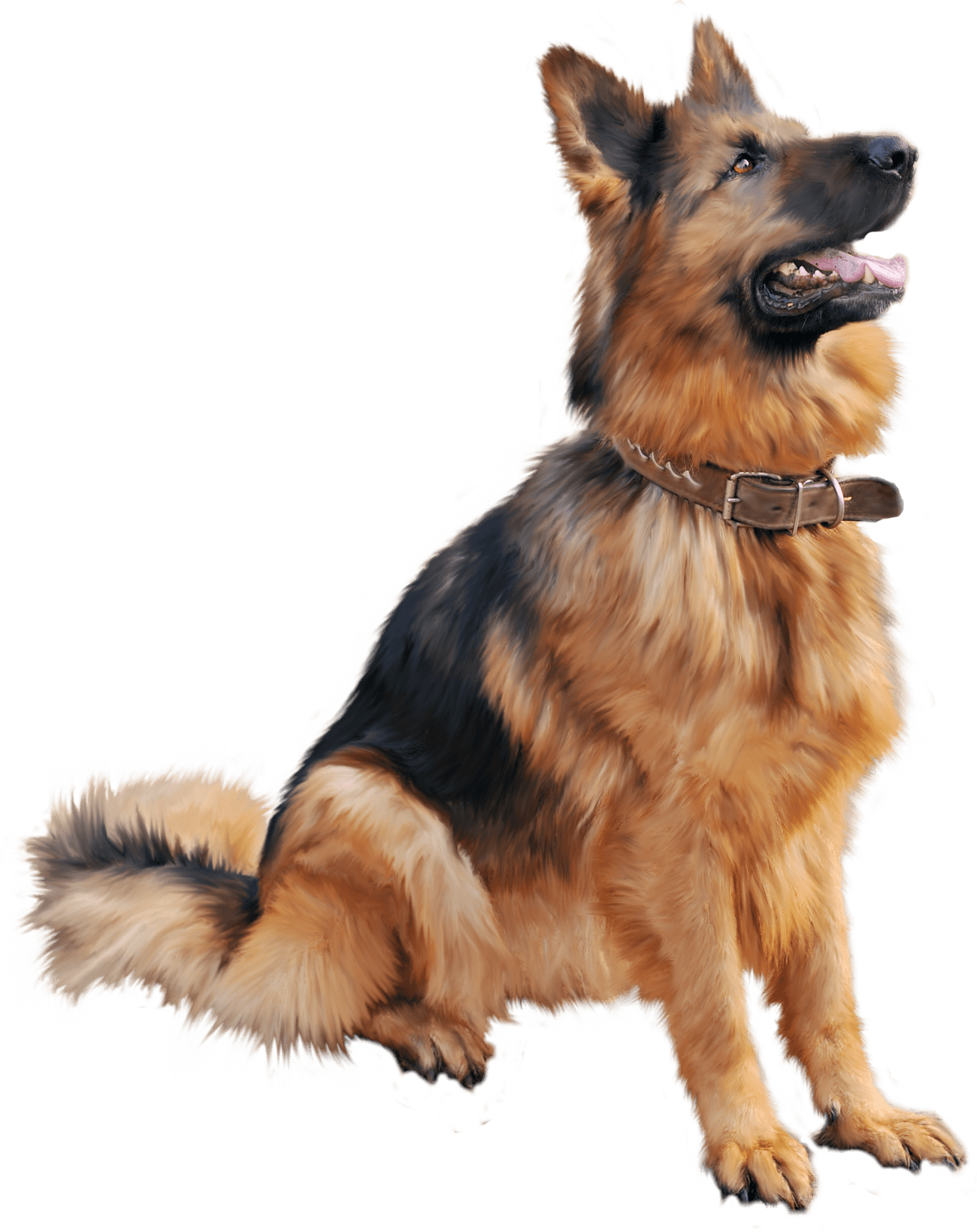 Download - PNG German Shepherd