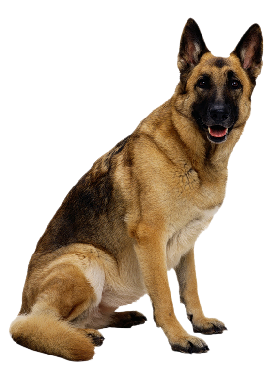 German Shepherd Clipart - PNG German Shepherd