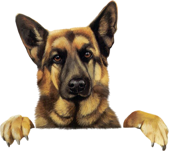 Image - GermanShepherd.png | Animal Jam Clans Wiki | FANDOM powered by Wikia - PNG German Shepherd