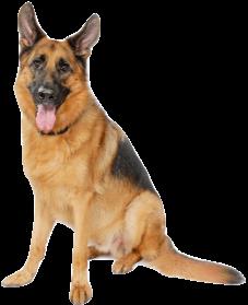 PNG German Shepherd - 66096