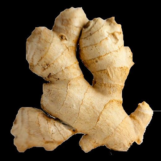 GINGER - PNG Ginger