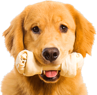 PNG Golden Retriever Dog - 53071