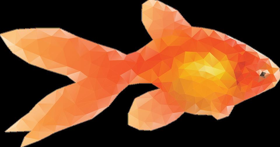 goldfish fish pets - PNG Goldfish