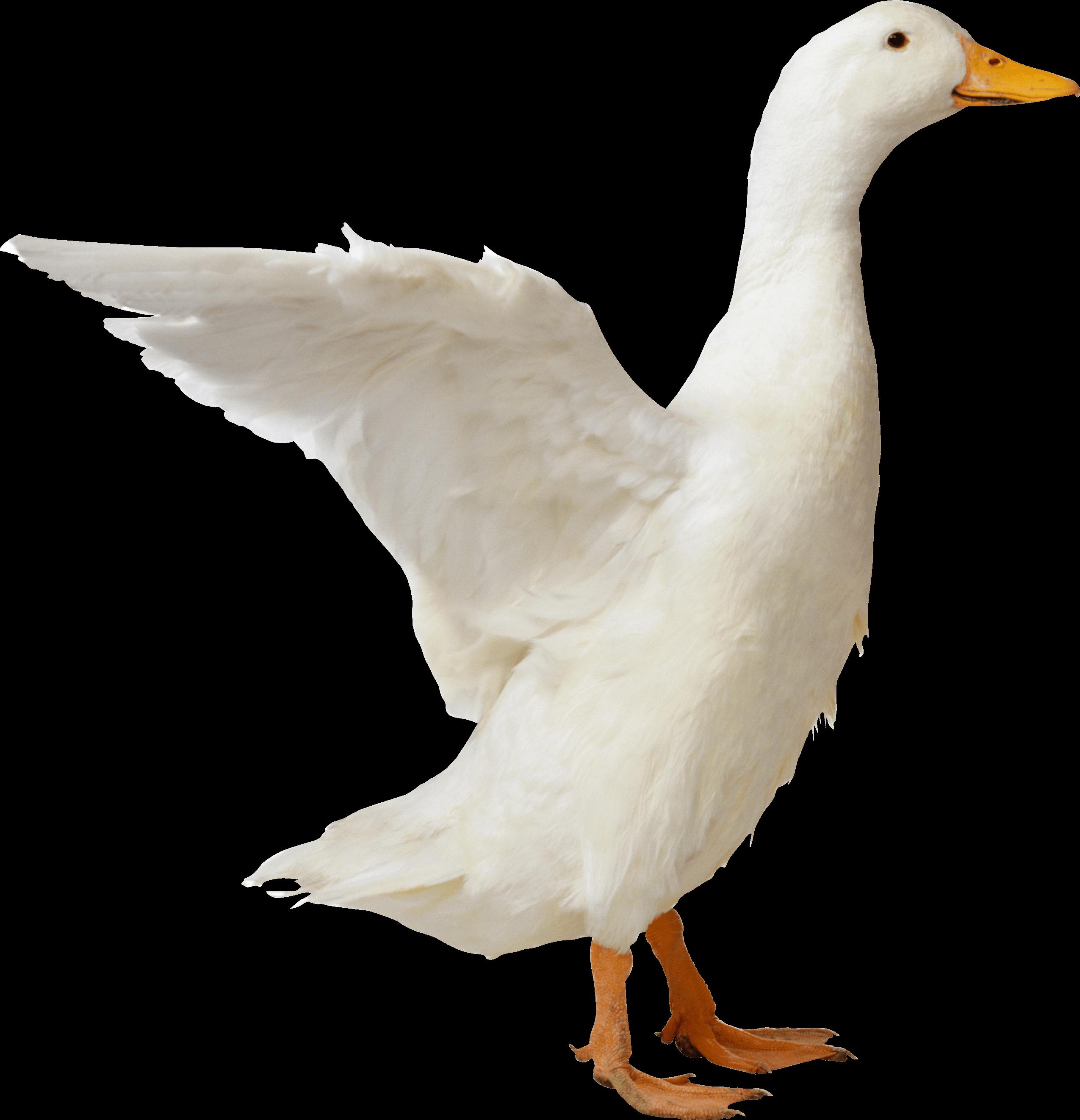 Download - PNG Goose