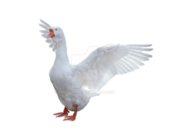 Goose PNG Picture - PNG Goose