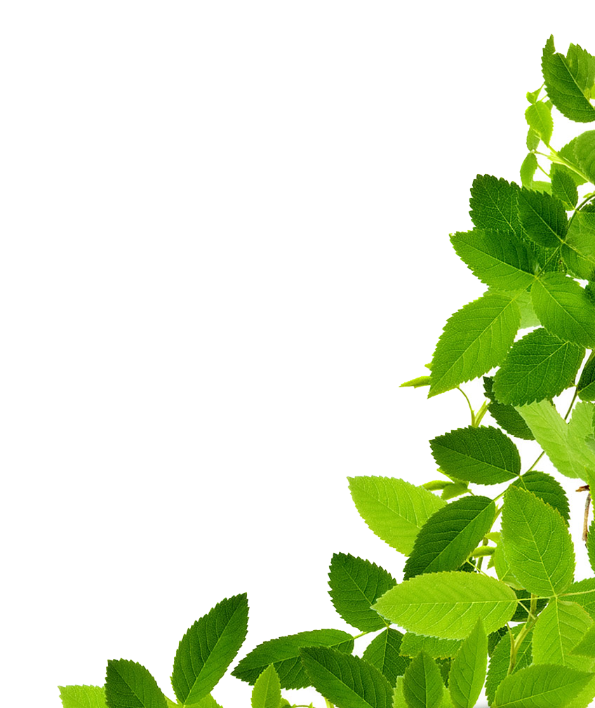 PNG Green Leaves Transparent Green Leaves.PNG Images. | PlusPNG