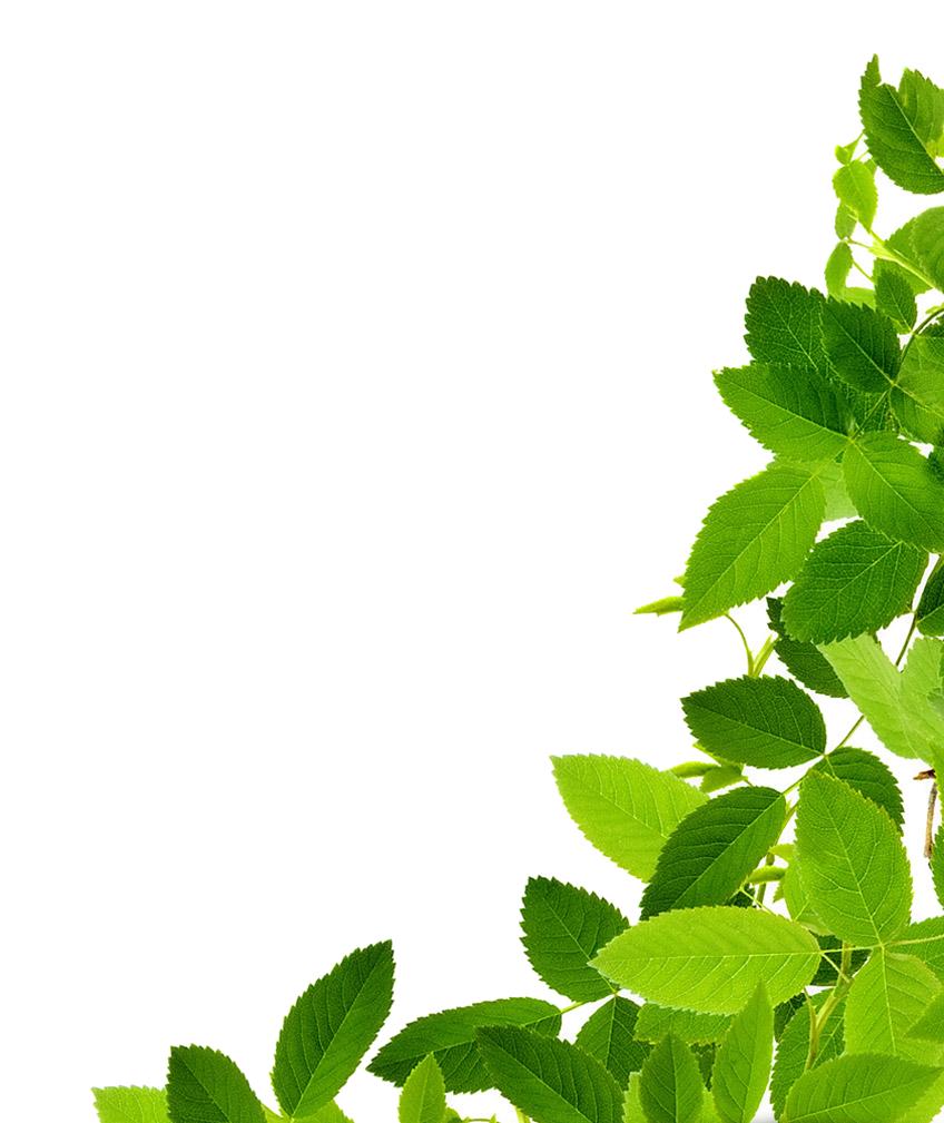 PNG Green Leaves Transparent Green LeavesPNG Images