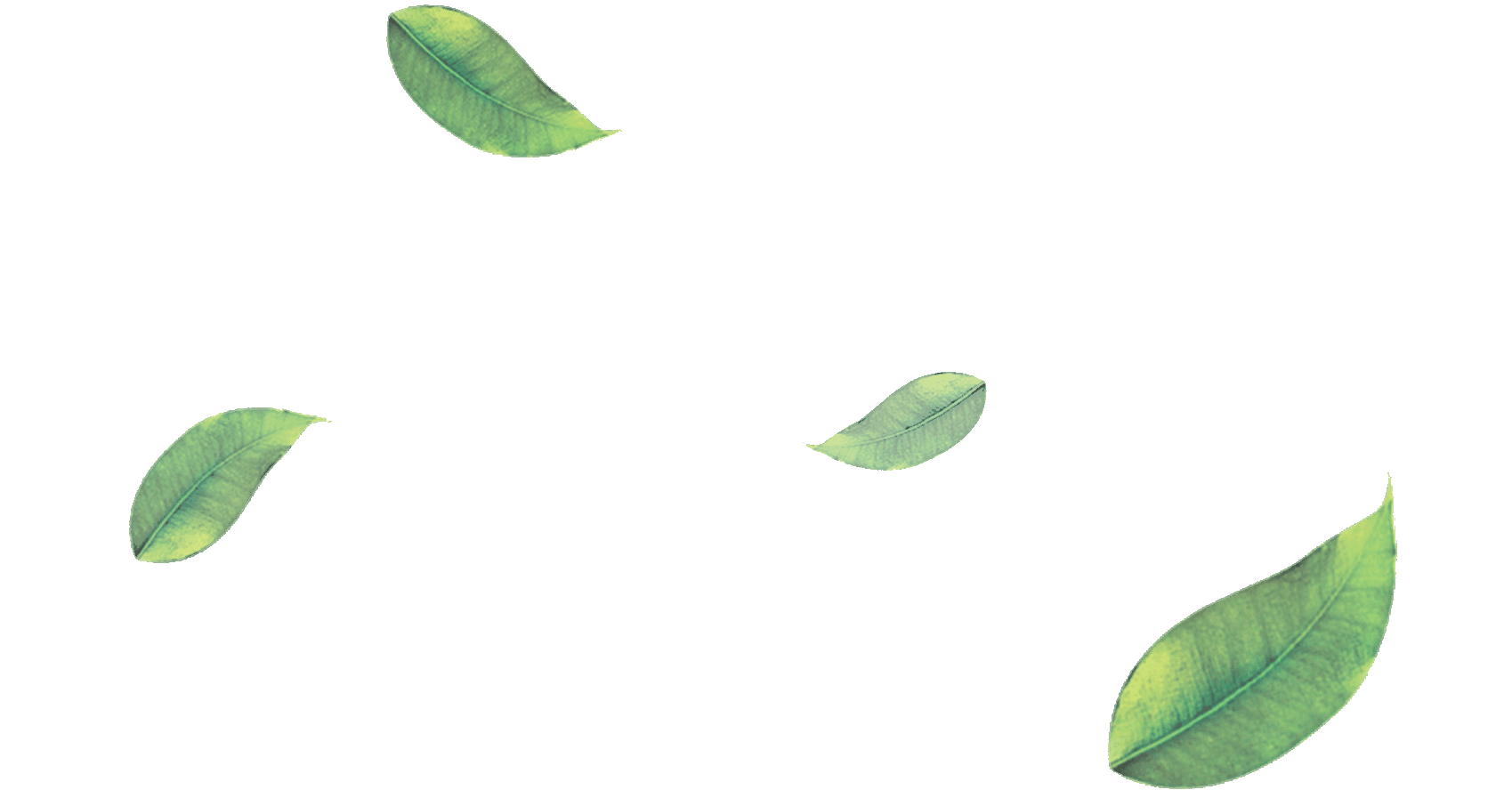 PNG Green Leaves Transparent Green Leaves.PNG Images ...