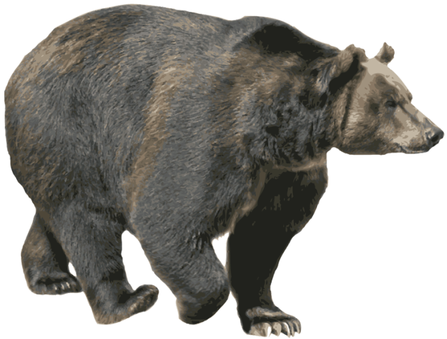PNG Grizzly Bear - 50913