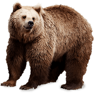 PNG Grizzly Bear - 50914