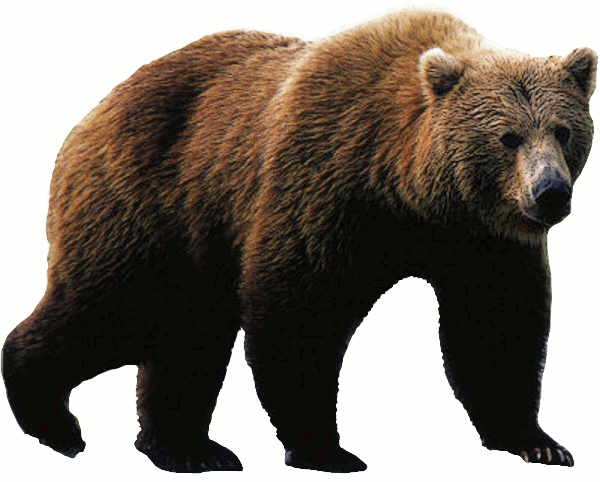 PNG Grizzly Bear - 50907