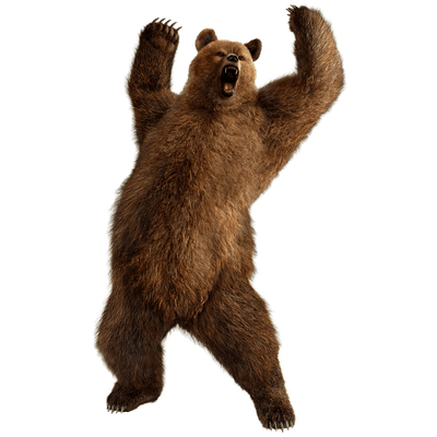 PNG Grizzly Bear - 50916