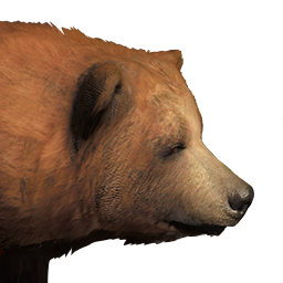 PNG Grizzly Bear - 50915