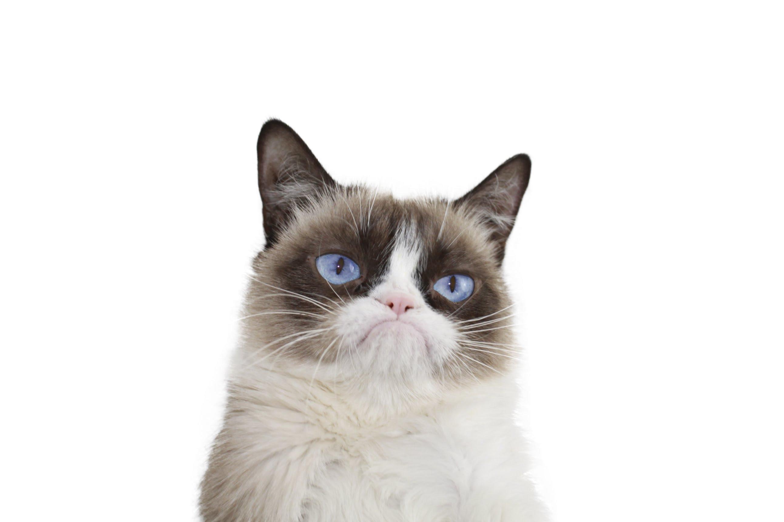 PNG Grumpy Cat - 65984