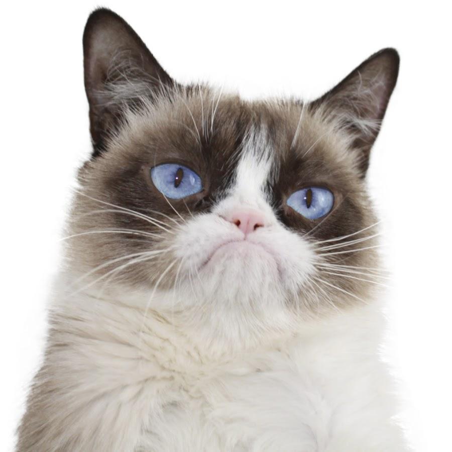 PNG Grumpy Cat - 65988