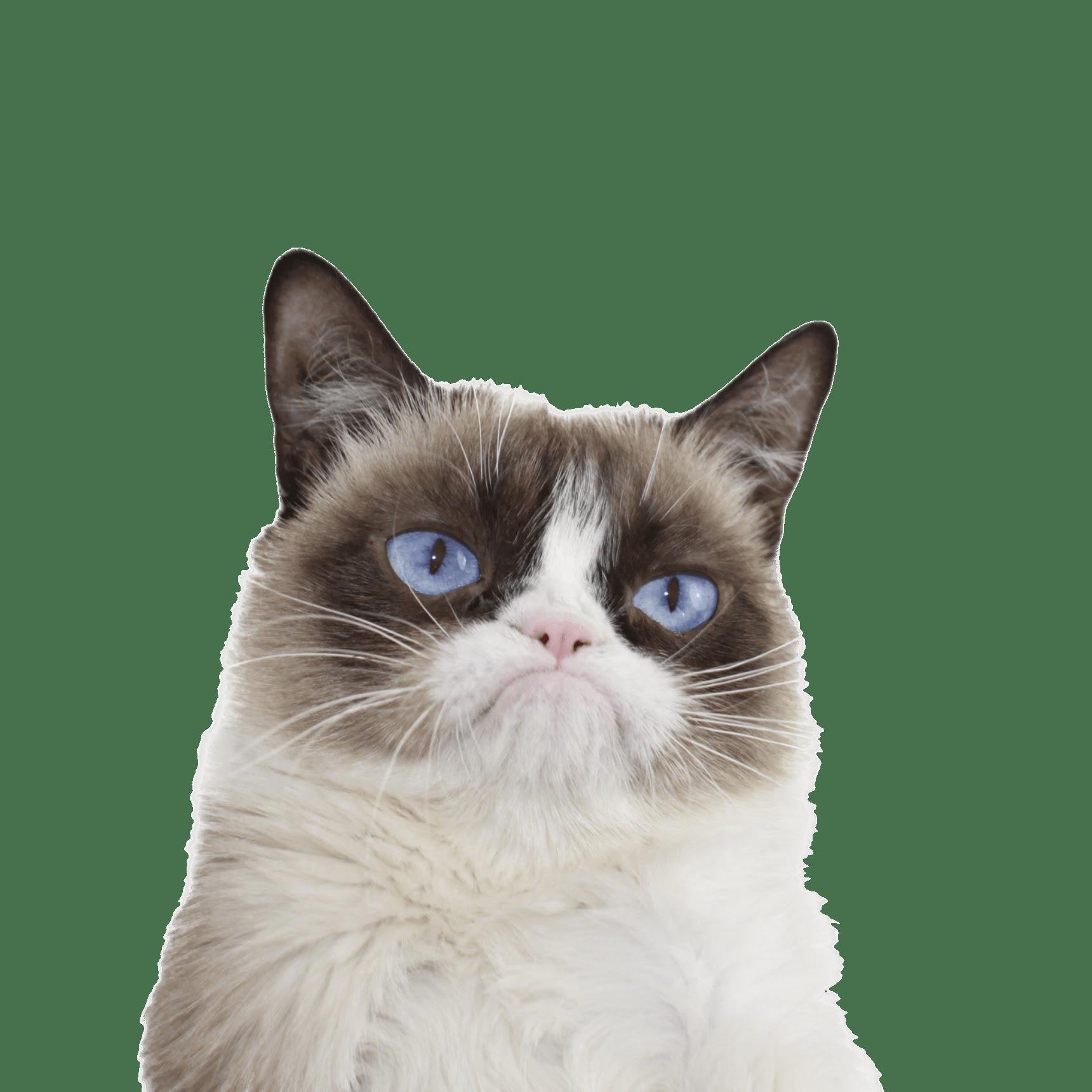 PNG Grumpy Cat - 65982