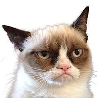 PNG Grumpy Cat - 65985