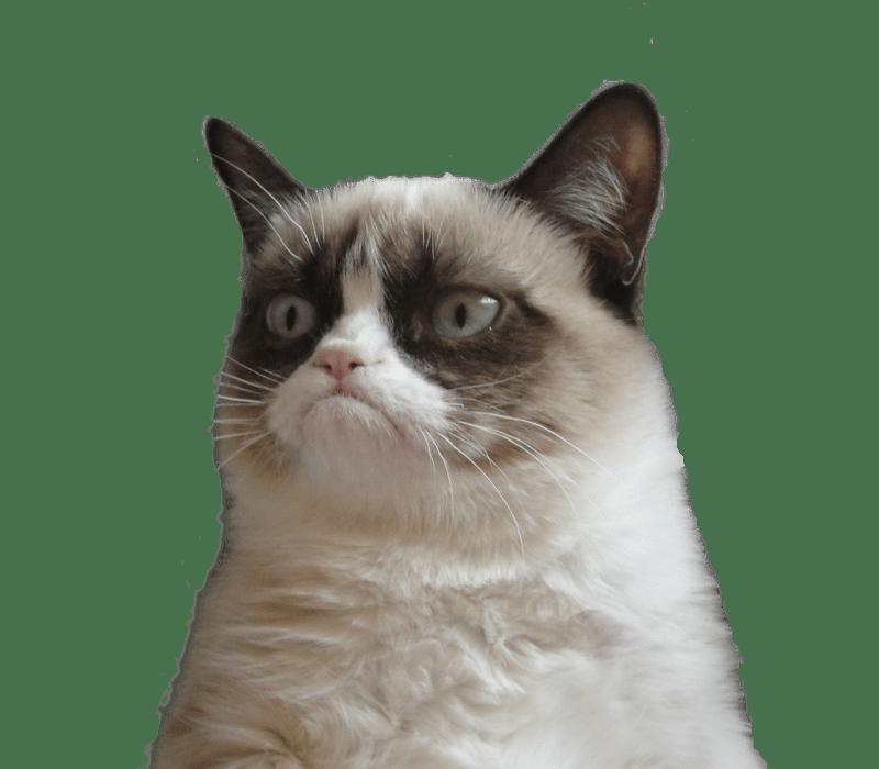PNG Grumpy Cat - 65983