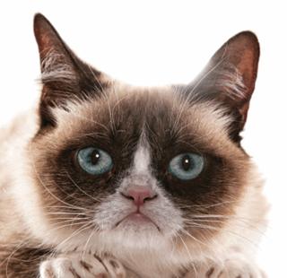 PNG Grumpy Cat - 65987