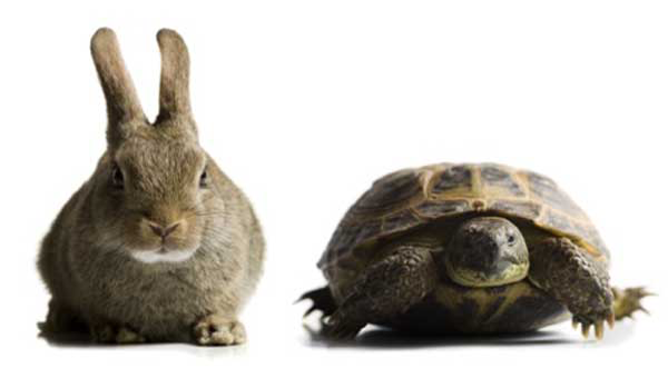 PNG Hare And Tortoise - 65778