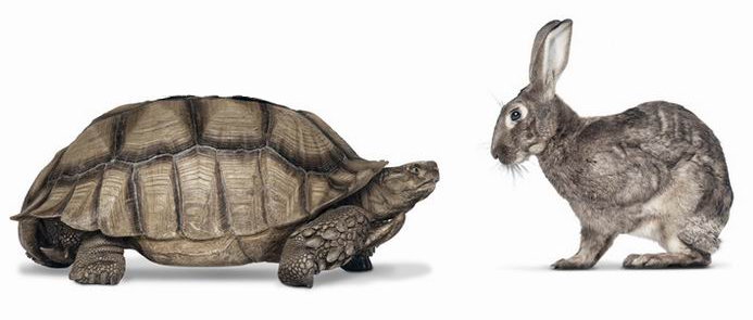 Like In The U201cTortoise And The Hareu201d, The Slow Movement Advocates The  Supremacy Of Doing Things Slowly And Its Benefits Over The PlusPng.com  - PNG Hare And Tortoise