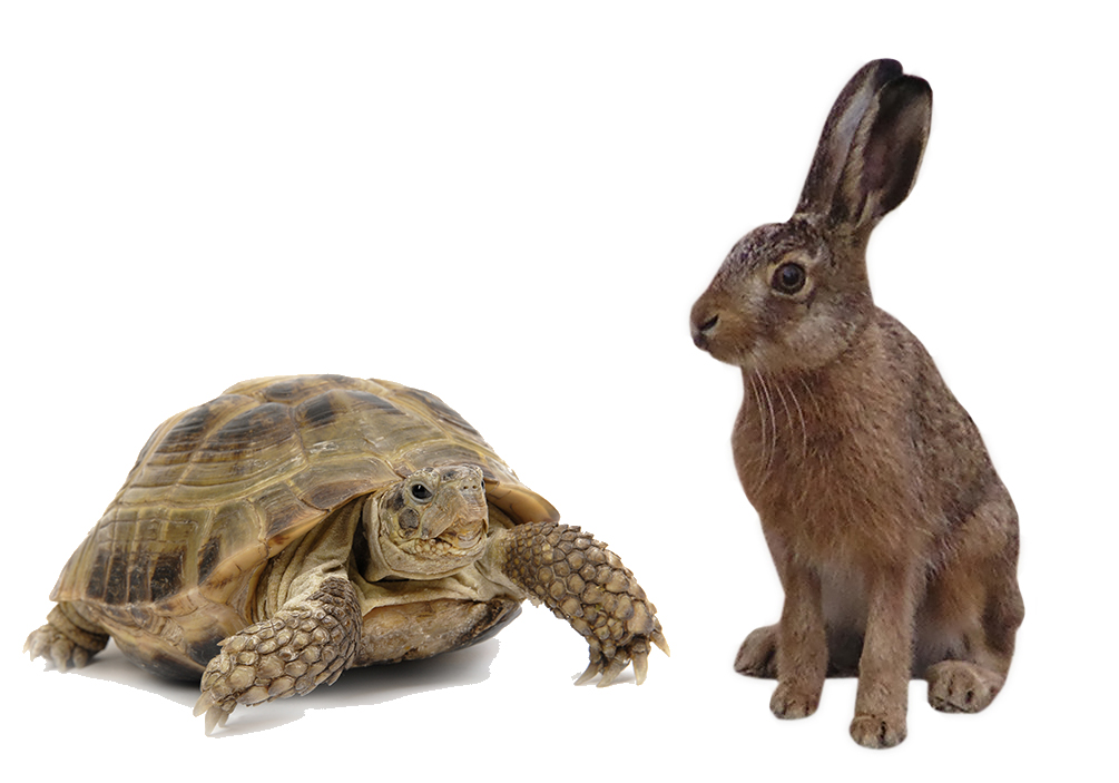 PNG Hare And Tortoise - 65779