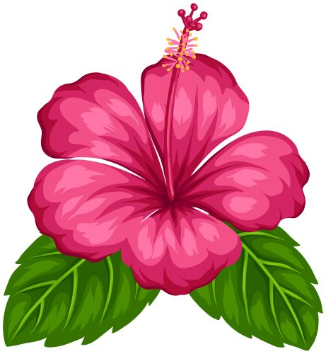 Exotic Flower PNG Clip Art, Flowers PNG / Clipart - transparent PNG  pictures and vector - PNG Hawaiian Flower