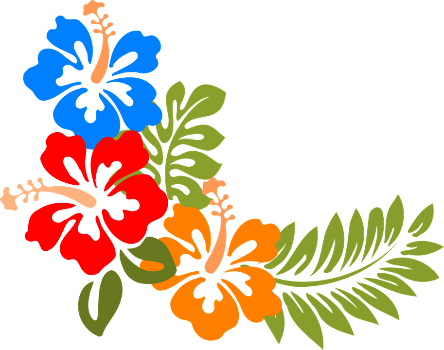 Hibiscus, Hawaii, Flowers, Tropical, Colorful, Spring - PNG Hawaiian Flower