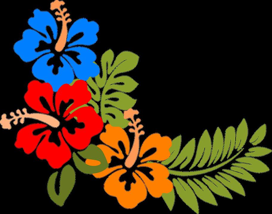 Hibiscus, Hawaii, Flowers, Tropical, Colorful, Spring - PNG Hawaiian Flower