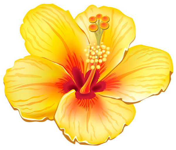 Yellow Exotic Flower PNG Clipart Picture - PNG Hawaiian Flower