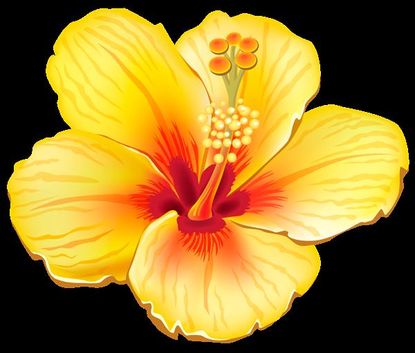 PNG Hawaiian Flower - 53371