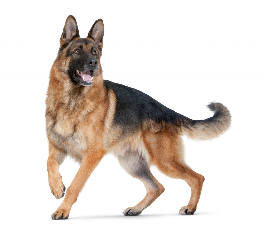 PNG HD Dogs - 123350