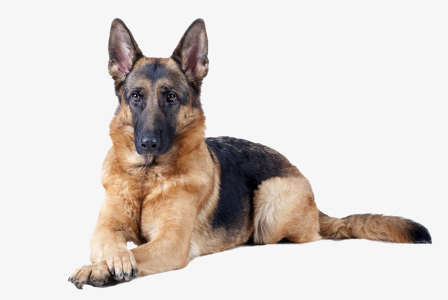PNG HD Dogs - 123353
