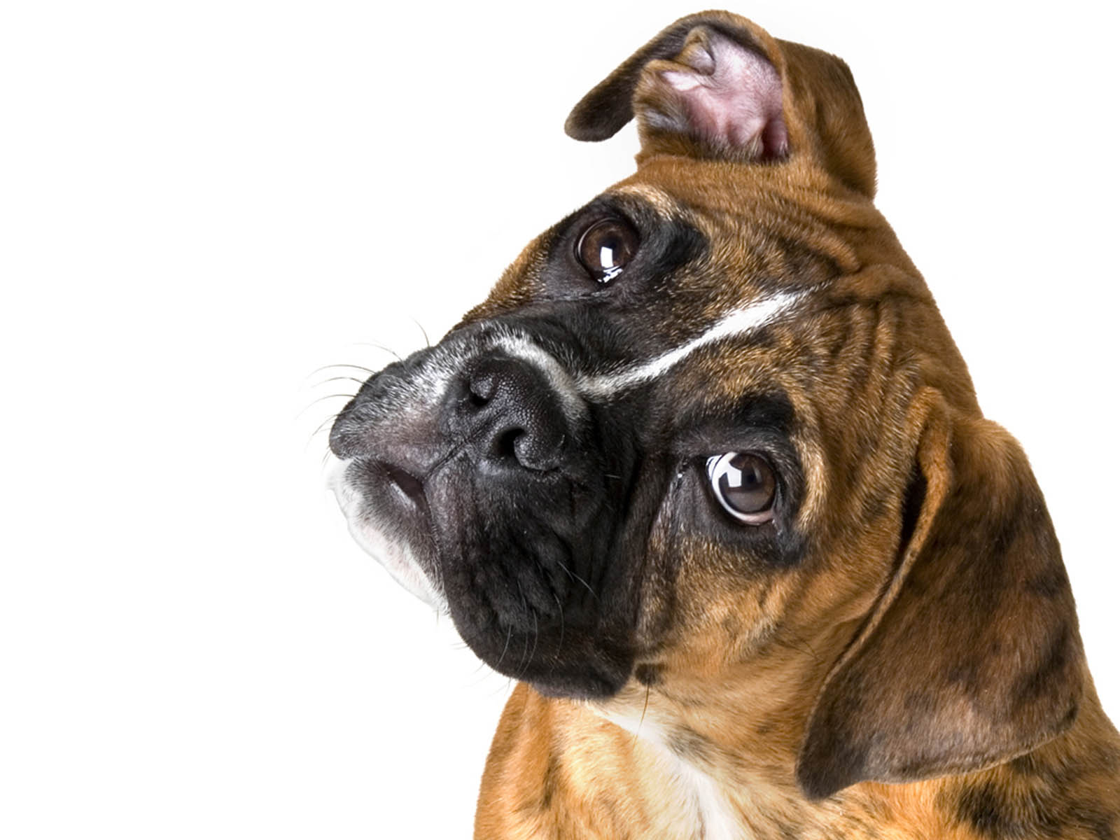 PNG HD Dogs - 123362