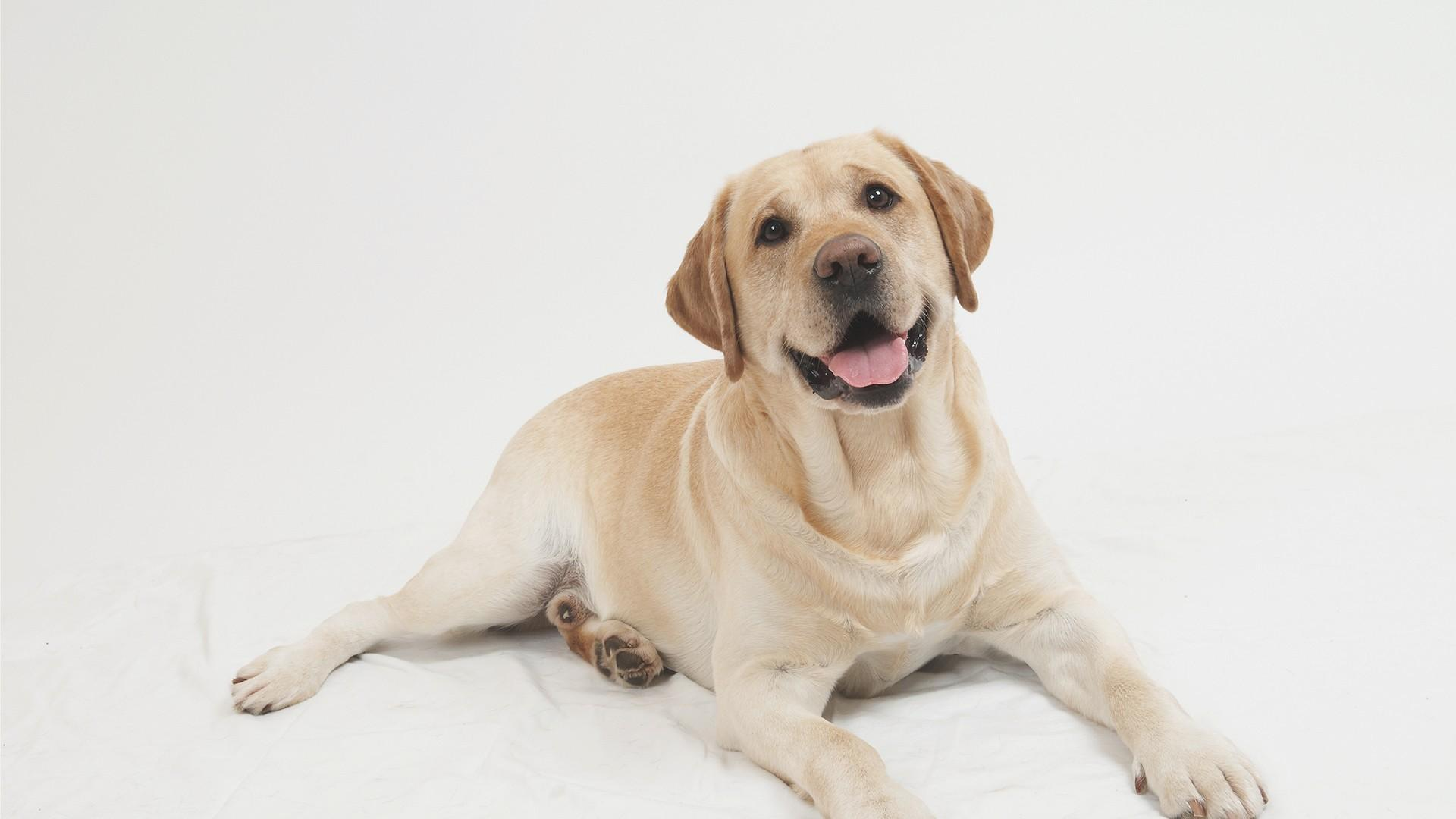 PNG HD Dogs - 123363