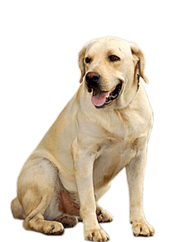 PNG HD Dogs - 123355