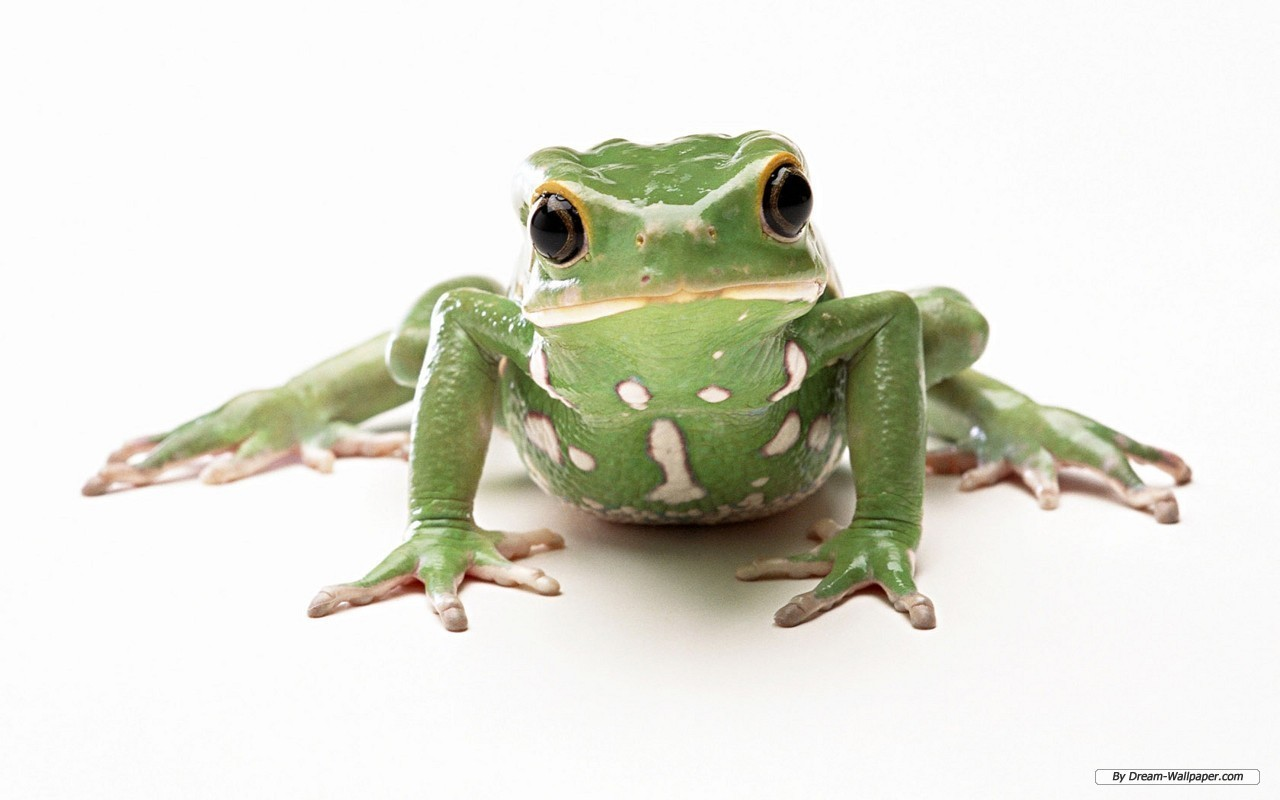 79f03d5.png - PNG HD Frog