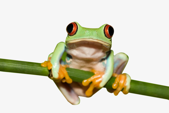 Tree Frog HD clips, Nature, Rare, Reptiles Free PNG Image - PNG HD Frog