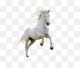 Horse Download Desktop Wallpaper - Animals HD Free matting material - PNG HD Horse