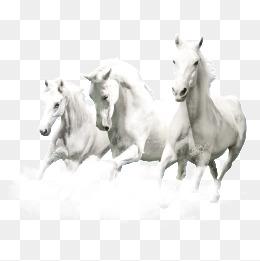 PNG HD Horse - 154924