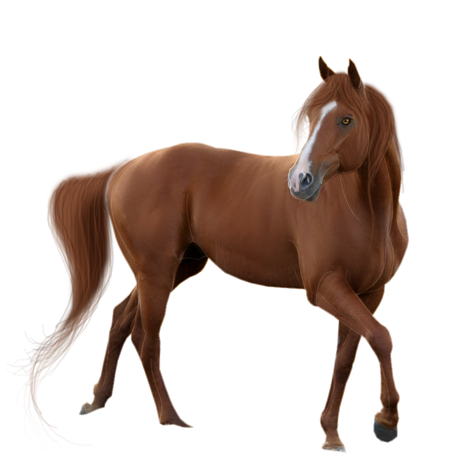 Horse Pictures, Eye Color, Free Horses, Google Search, Photos, Hd  Wallpaper, Animals, Cgi, Pose - PNG HD Horse