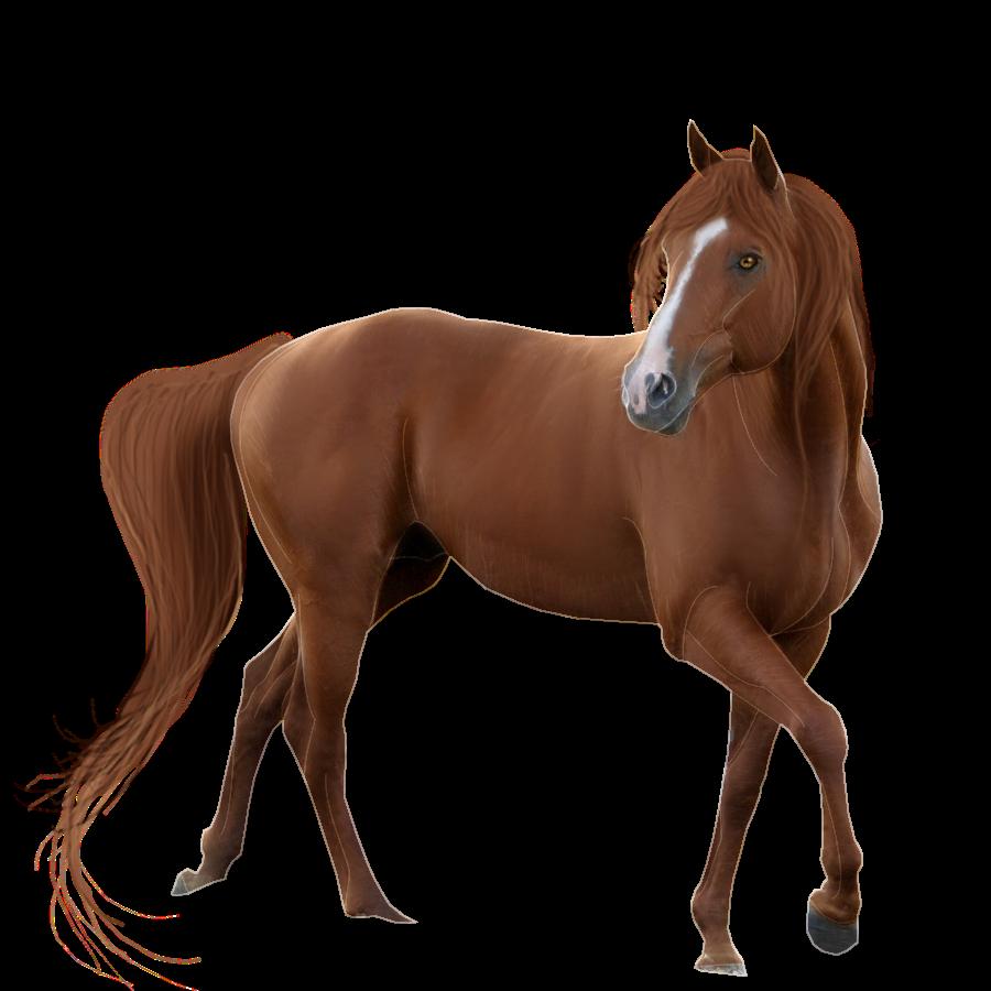PNG HD Horse - 154912