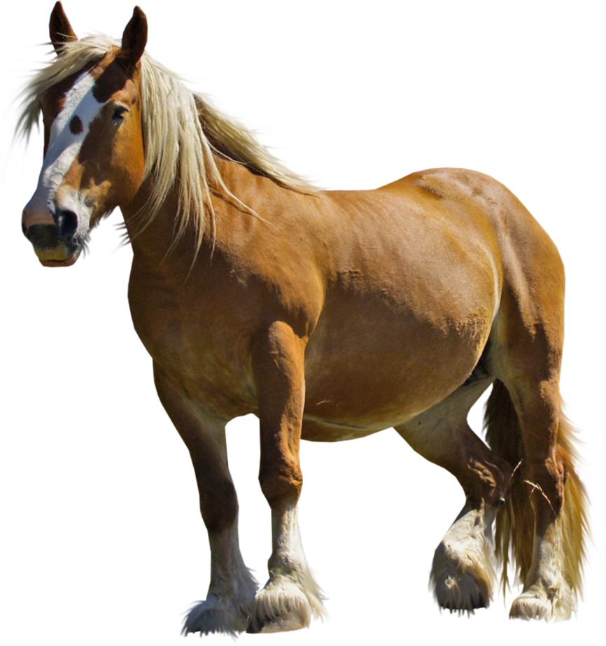Horse PNG Stock 1 by Gilgamesh-Art PlusPng.com  - PNG HD Horse