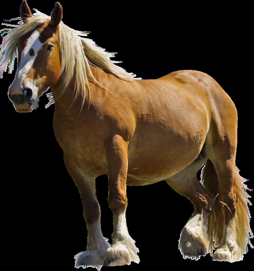 PNG HD Horse - 154919