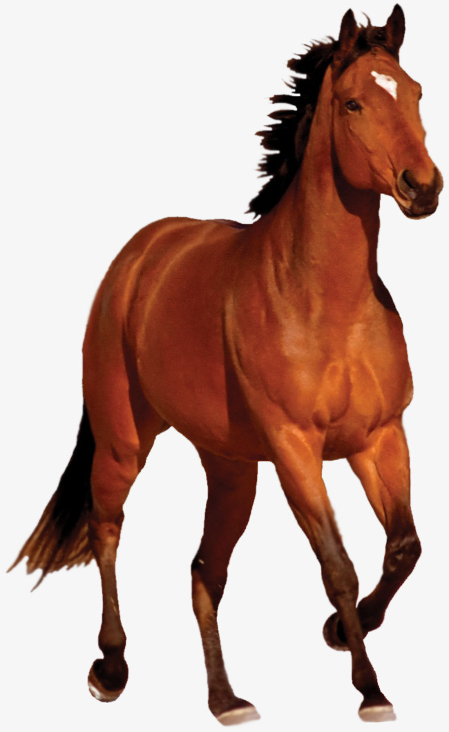 png hd malaysia, Mustang, Malaysia, Horses PNG Image and Clipart - PNG HD Horse