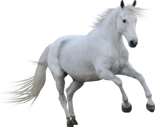Pre-cut by the-horse-lover PlusPng.com  - PNG HD Horse
