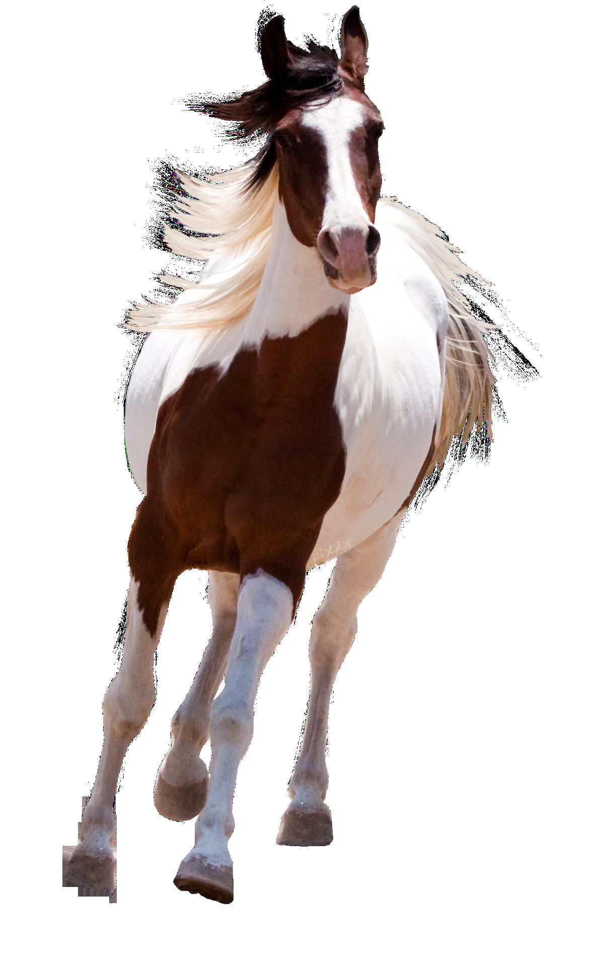 PNG HD Horse