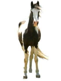 standing horse png - PNG HD Horse