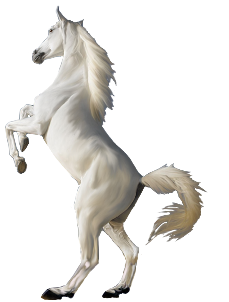 White horse png image - PNG HD Horse