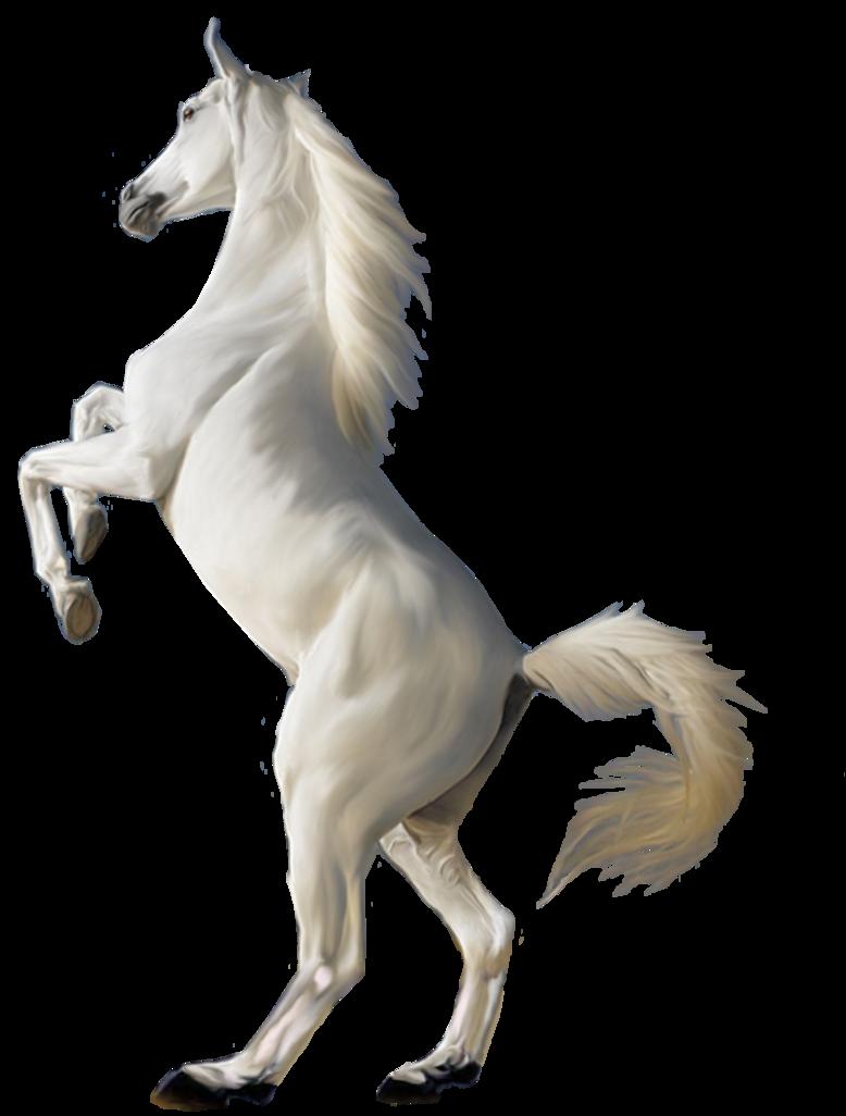 PNG HD Horse - 154927